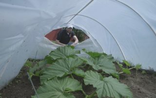 St. Cloud Farmer Unlocks Secrets To Growing Giant Pumpkins