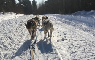 Dogsledding In Northern Wisconsin
