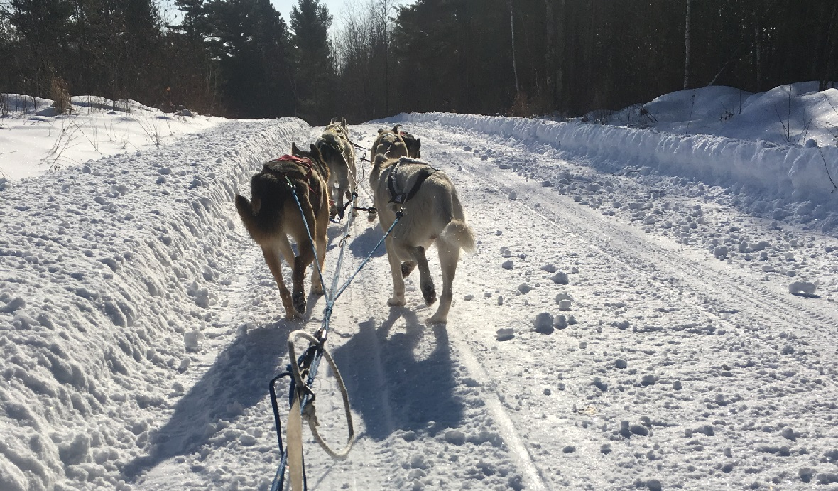 Julie Buckles' view of her pack from the sled. (Danielle Kaeding/WPR)