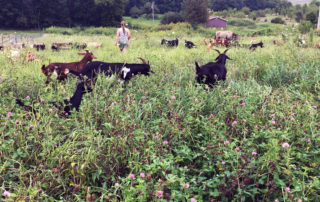 Kim Hunter, owner of target grazing company The Green Goats, is in a field in Browntown, Wisconsin, with her goats. Hunter takes her herd of goats to properties where the goats graze and cull vegetation for property owners. The method is often chosen because it's more environmentally friendly.