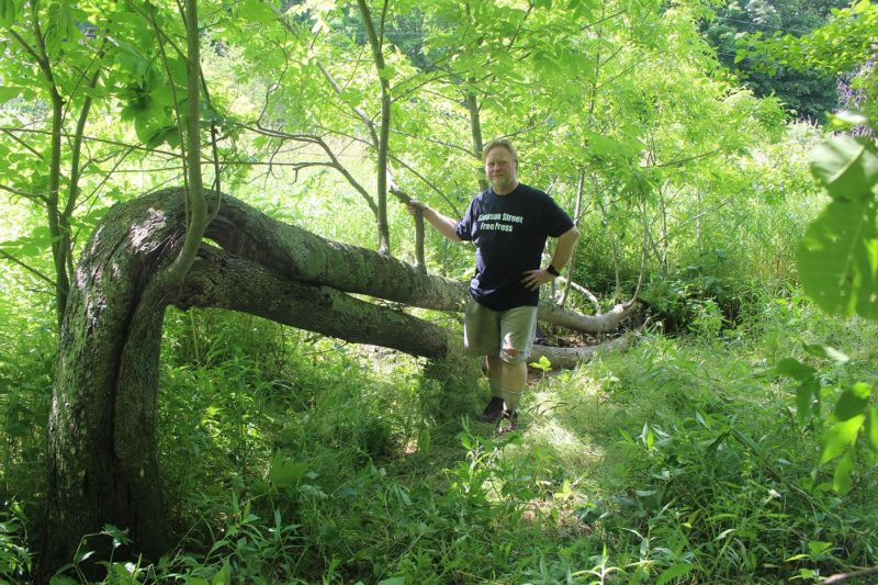 Bill Lueders with a tree on his land in Richland County. (Courtesy of Bill Lueders)