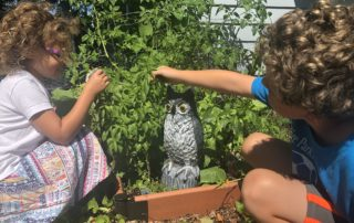 Members of the Hollars family explore their garden as the plastic owl keeps watch. (Photo by Meredith Hollars)