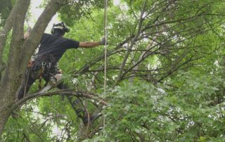 Madison Arborist Utilizes Surprising Techniques