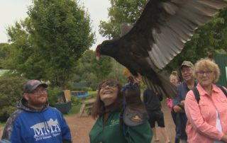 Antigo Woman Helps Injured Birds Recuperate In A Safe Haven