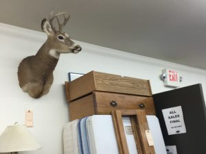Deer head for sale at St. Matthias' Thrift Shop. (Photo by Jane Hampden)